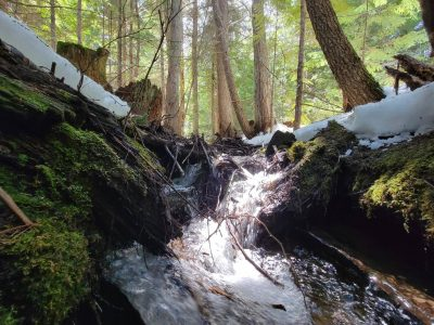 Cooper Spur Old Growth Forest 1
